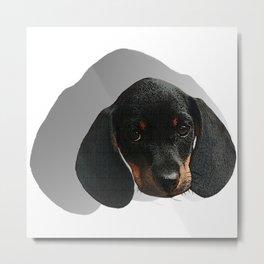 Dachshund baby head, dogs, baby animals Metal Print