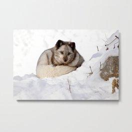 Sweet fox in winter Metal Print