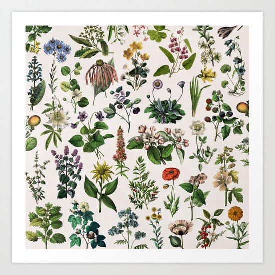 vintage botanical print by anniemariedesigns