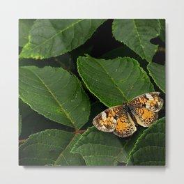 Butterfly roosting on leaf Metal Print