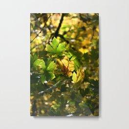 Golden Glow Metal Print