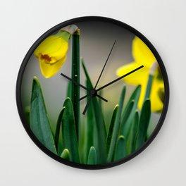 Gelbe Osterglocken Knospe Wall Clock