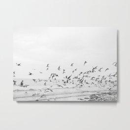 """Seagulls"" | Coastal black and white photo | Film photography | Beach Metal Print"