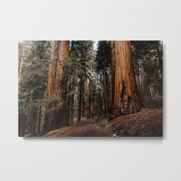 Walking Sequoia 2 Metal Print