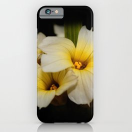 Yellow Mexican Satin Flowers iPhone Case