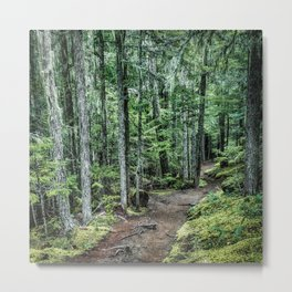 Nature Landscape Forest Trail Metal Print