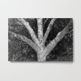 Fanned out Branches II Metal Print