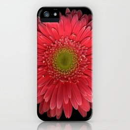Coral Gerbera Daisy iPhone Case