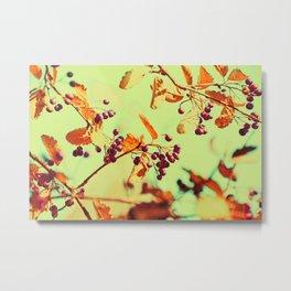 Autumn Berry Crossings @ Die Farbenfluesterin Metal Print