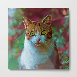 Cute Cat Collection 16 Metal Print