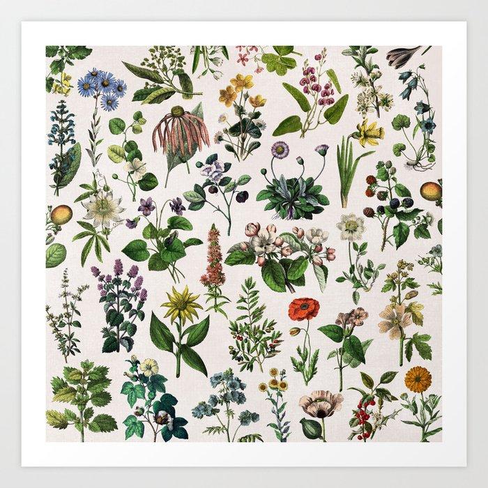 vintage botanical print Kunstdrucke