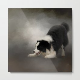 Ready to Play - Border Collie Metal Print