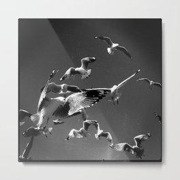 Flock to Feed Metal Print