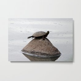 Baby Turtle on a Rock Metal Print