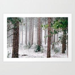 Snowy Pine trees Art Print