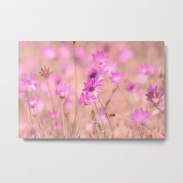 Wild pink meadow flowers II, nature photography, romantic pink colors Metal Print
