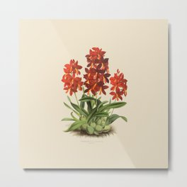 R. Warner & B.S. Williams - The Orchid Album - vol 01 - plate 004 Metal Print