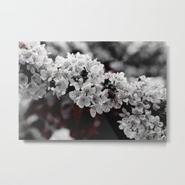 FLOWERS - BLOOM - NATURE - PHOTOGRAPHY Metal Print