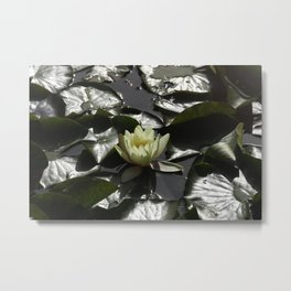 Lotus on the water Metal Print