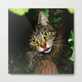Cat licking nose hunting prey extending claws sitting on tree predator cat Metal Print