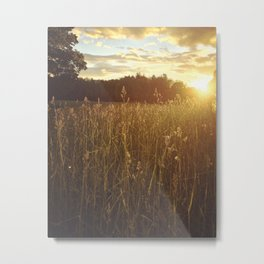 Grassland Sunset Metal Print