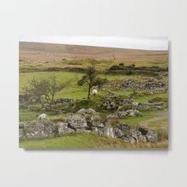 Sheep Amidst English Ruins Metal Print