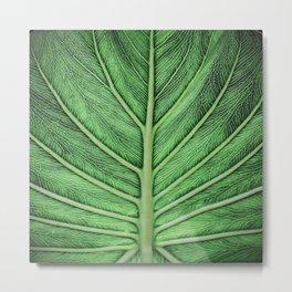 leaf vein [muted] Metal Print