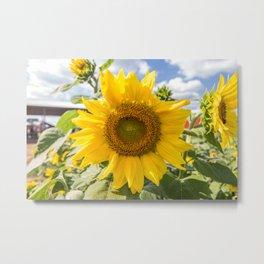 October Sunflower Metal Print