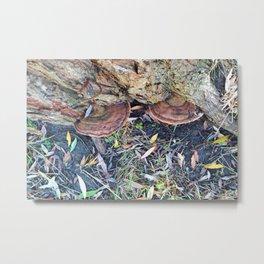 Mushrooms in Autumn Metal Print