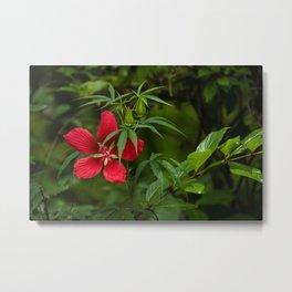 Scarlet Rose Mallow Metal Print
