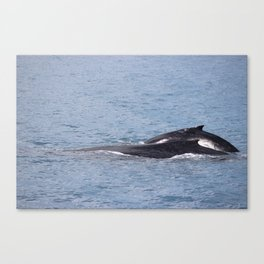 Mother and Calf in Hervey Bay Canvas Print