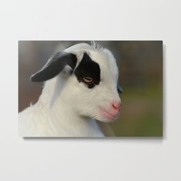 Baby Goat Portrait Metal Print