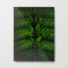 Close Up Of A Green Fern Leaf Intricate Patterns In Nature Against A Black Background Metal Print