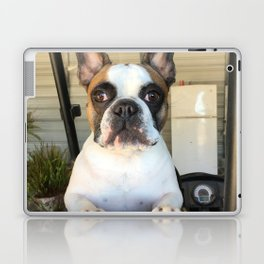French Bull  Dog  Puppies Laptop & iPad Skin