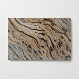 Close-up view rough texture of tree trunk Metal Print