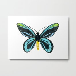 Queen Alexandra' s birdwing butterfly Metal Print