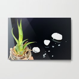 fat plant with white stones Metal Print