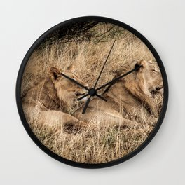 Camouflaged African Male Lions of the Kalahari Desert Wall Clock