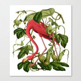 Flamingo Leinwanddruck