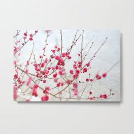 Beautiful Cherry Blossoms at the Imperial Palace in Kyoto, Japan Metal Print