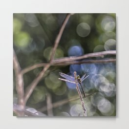 Dragon Fly in Forest Metal Print