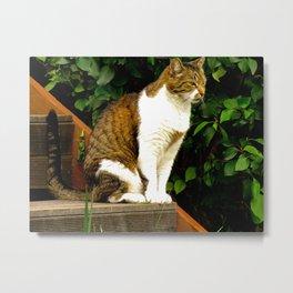 """Felis Catus"" by ICA PAVON Metal Print"