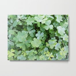 Clovers all over Metal Print