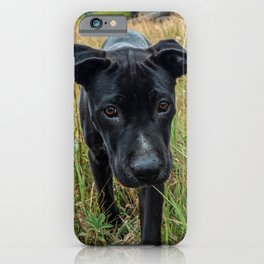 Doggy in the Field // Natural Filter Hiking by Rustic Abandoned Log Cabin Summit Colorado iPhone Case