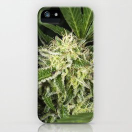 cannabis flower and leaves iPhone Case