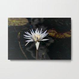 White Lilly Metal Print