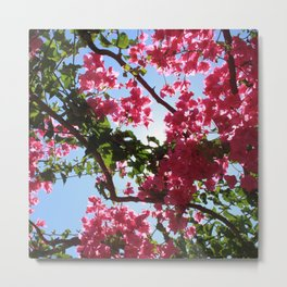 Perfect Pink Bougainvillea In Blossom Metal Print