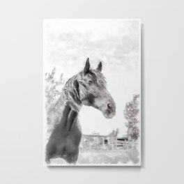Horse in the Field.  Black and White. Watercolor Painting Style. Metal Print