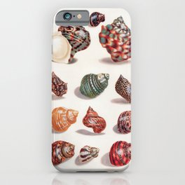 Unknown Title by Maria Sibylla Merian // Vintage Sea Shells Colorful Shapes and Sizes with Shadows iPhone Case