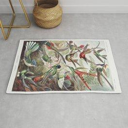 Hummingbirds illustration by Ernst Haeckel. Rug